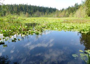Stanley Park - Beaver Lake